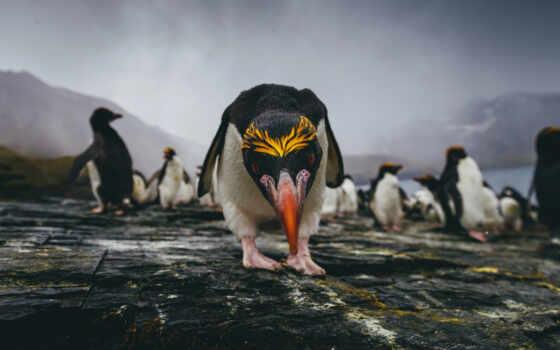пингвин, david, модный, funny, разнообразие, телефон, print, merron, победить, заставка