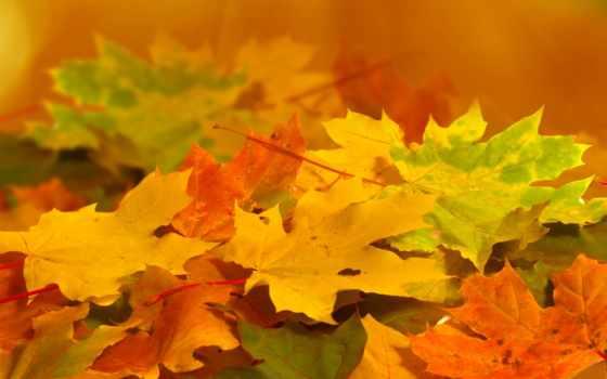 листья, оранжевые