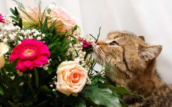букет, кот, цветы