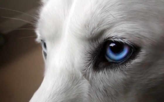 волки, волк, красивые