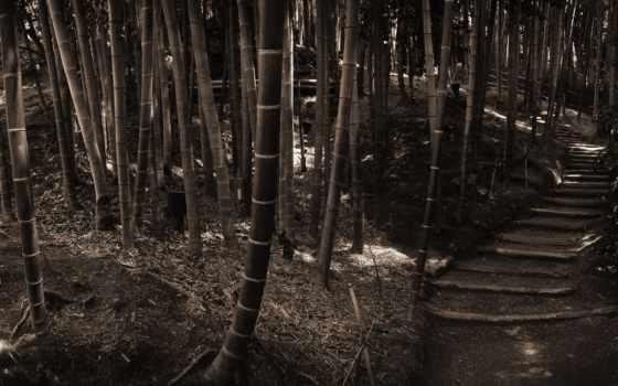 бамбук, природа, grove, фотообои, небо, everything,