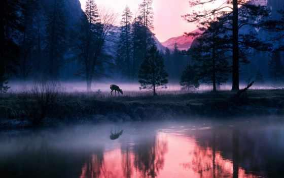 пейзажи -, лесов, лесу, утро, банка,
