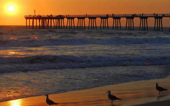 закат, море, pier, чайки, картинка, чайка, природа, небо,