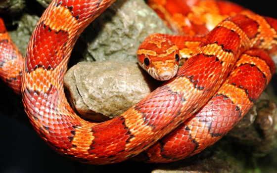 snake, змеи, окрас