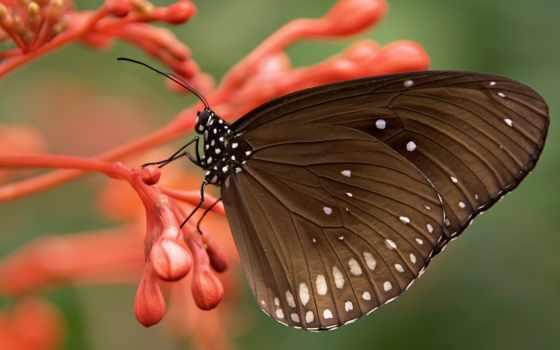 butterflies, бабочки, букеты, доставкой, cvety, растровый, композиций, магазин, саратову, клипарт,
