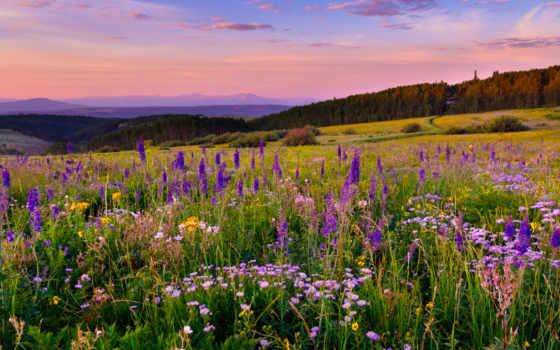 цветы, луг, purple, который, plateau