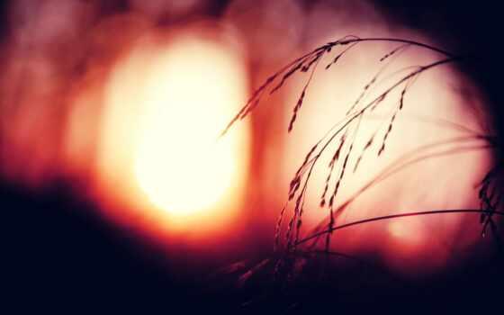 пшеница, трава, рассвет