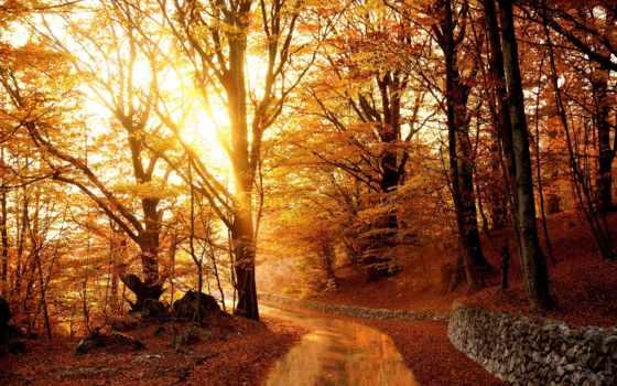 осень, landscape, деревья