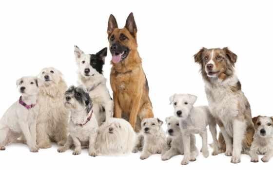 собаки, собака, породы