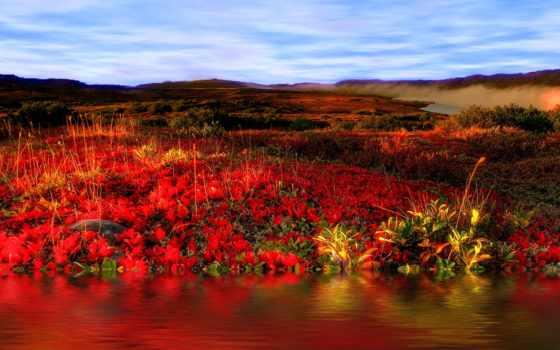 url, поле, роз, небо, природа, radikal, цветы, landscape, red, фото, js,