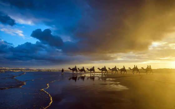 zhivotnye, caravan, море, верблюды, camel, природа, красивые, берег, закат, пляж, оцелот,