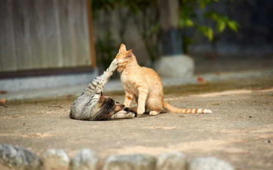 кот, oboi, colibri, zhivotnye, яndex, коллекциях, весна, комментарий,