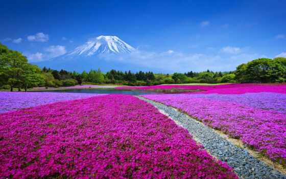 гора, цвета, fudz, weed, japanese, природа, fudziyamoi, permission, цветы, nant