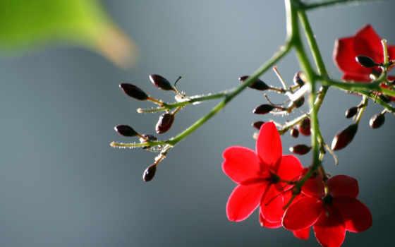цветы, макро Фон № 32796 разрешение 1920x1200