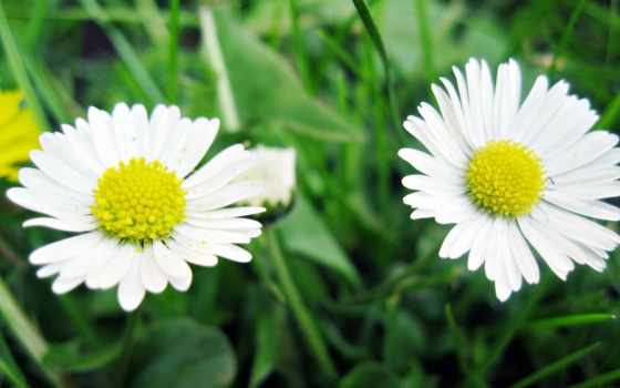 makro, cvety, priroda Фон № 93615 разрешение 1920x1200