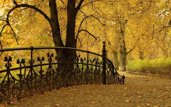 природа, осень, туман