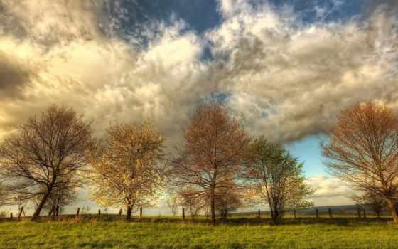 весна, природа, поле, небо, trees, oblaka, цветение,