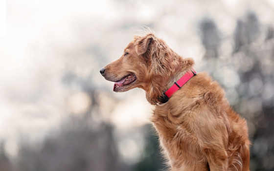собаки, взгляд, собака, друг, zhivotnye, amigo, animals, dogs, papel, два,