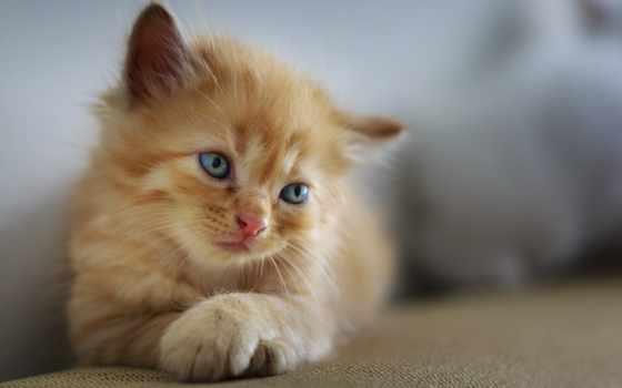 ago, animal, кот, lower, donner, пазлы, природа, days,