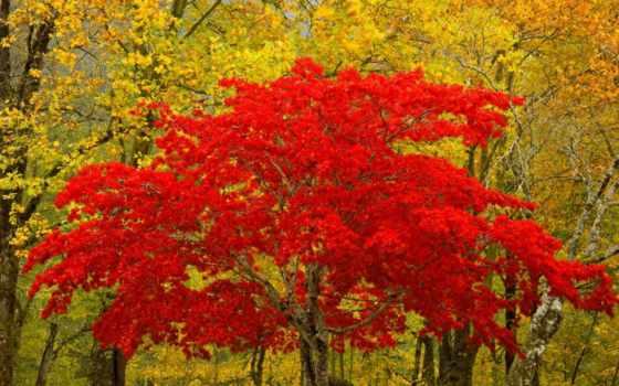 trees, листва, red, коллекция, дерево, bush, деревьев, card, осень, абонент