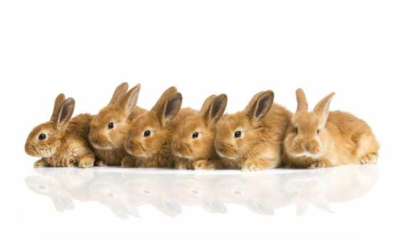 кролики, пушистики
