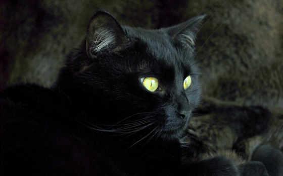 кот, жизни, испытывал, time, нас, суеверного, хотя, страха, кошкой, черной, давайте, пойдет, little, признаемся,