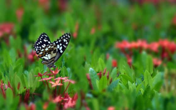 бабочка, цветы, красивое