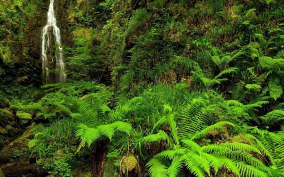 природа, ручей, лес Фон № 83859 разрешение 1920x1080