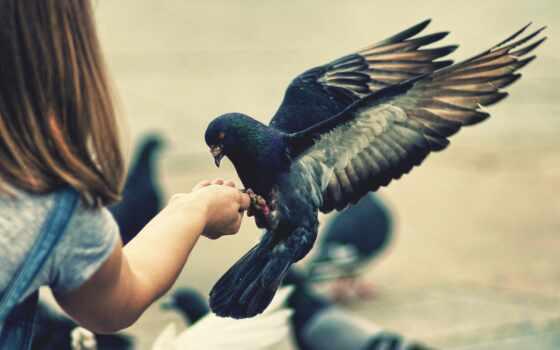 птица, девушка, birds, cute, girls, feeding,