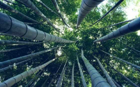 компьютера, заставки, imagesbase, экран, весь, лес, природа, планшета, фоны, бамбук, февр,