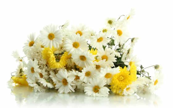 kwiaty, zdjęcia, изображение, desktop, free,