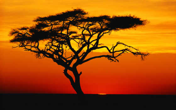 african, acacia, закате, природа, горы, закат, страница, тегом, лес, заставки,