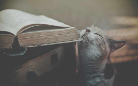 кот, книга, receiver, книгой, красивые, кошки,