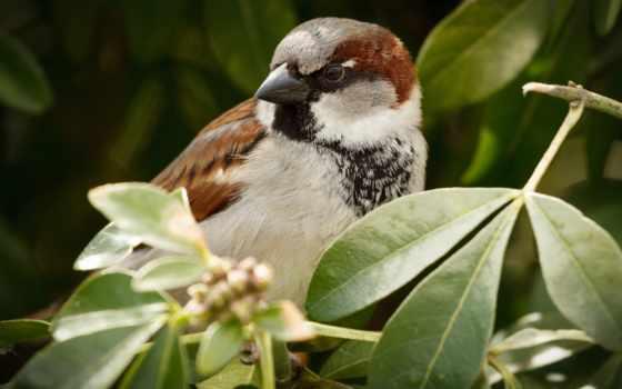 воробей, птица, birds, animal, природа, animals, дерево, index, scraper,