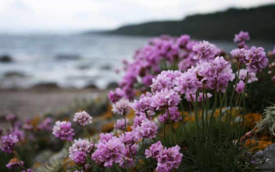 природа, берег