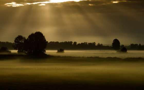 поле, ночь, туман