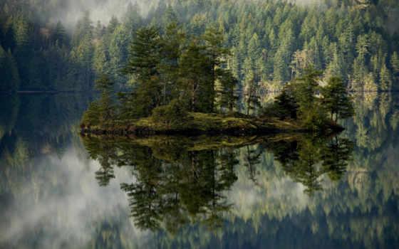 , туман, остров, остров, елки,