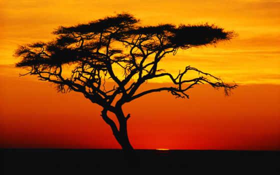 закат, african, заката, африка,