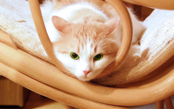 кот, глаза, котенок