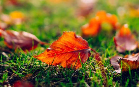 природа, осень, листья, оранжевые, макро, трава, лист,