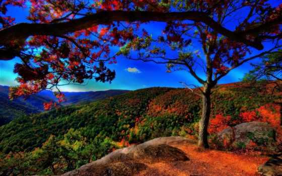 осень, trees, холмы