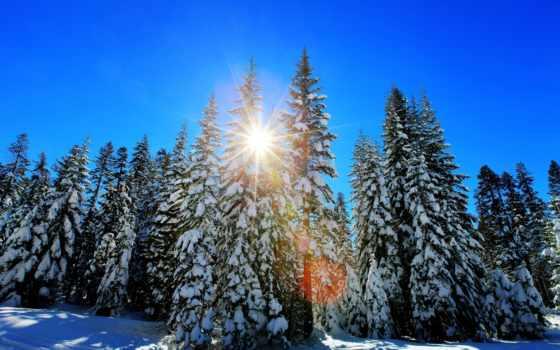 redwoods, восход, california