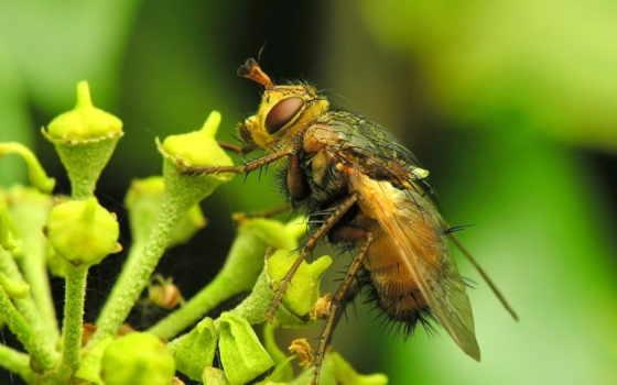 пчелка, desktop, мед, high, free, pictures,