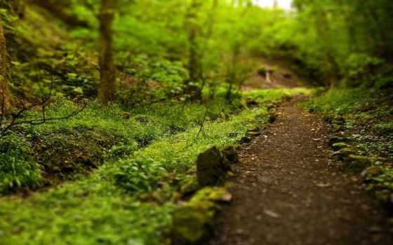 тропинка, лес, trail, природа, зелёный, дорога, ветки, trees, трава,