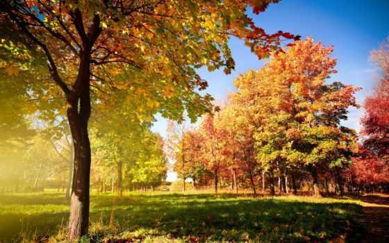 природа, осень, широкоформатные, trees, листва, landscape, park, высокого, сайте, трек,