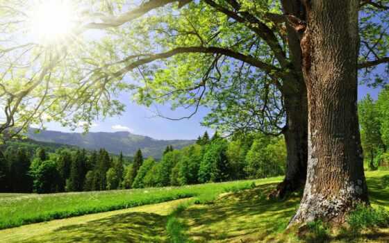 лес, summer, коллекция, гора, landscape, trees, природа