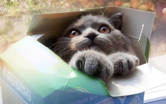 кот в каробке