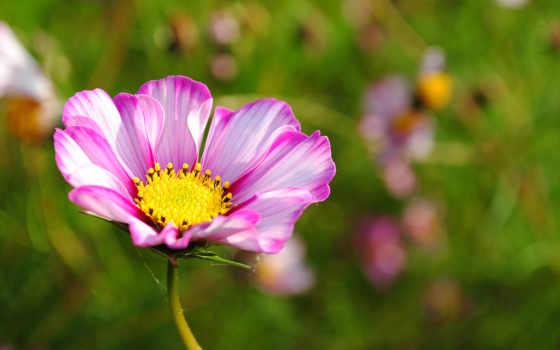 цветы, макро, природа
