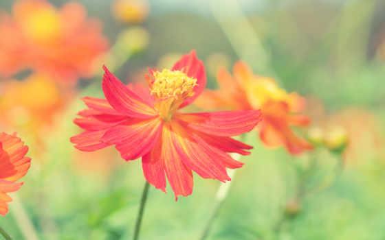 цветы, страница, summer
