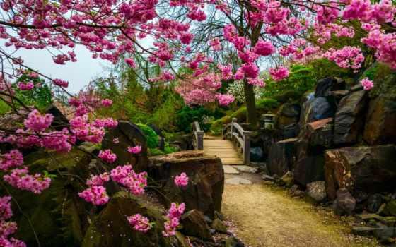 Сакура, ecran, fond, цветы, sur, дерево, pinterest, more, fonds,